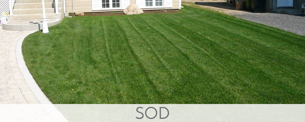 Sod Removal and Installation
